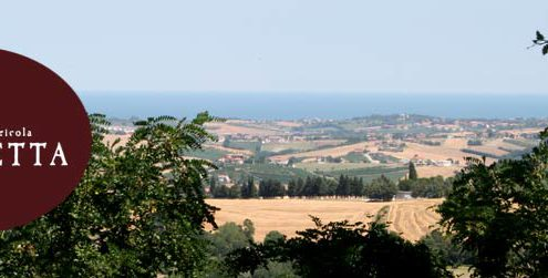 Fiammetta - Degustazioni di vino e olio all'azienda agricola Fiammetta