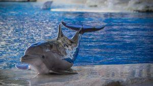 oltremare-delfino