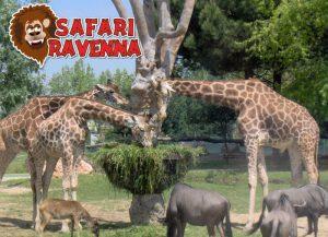 Visita allo Zoo Safari Ravenna